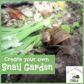 Creating A Snail Garden