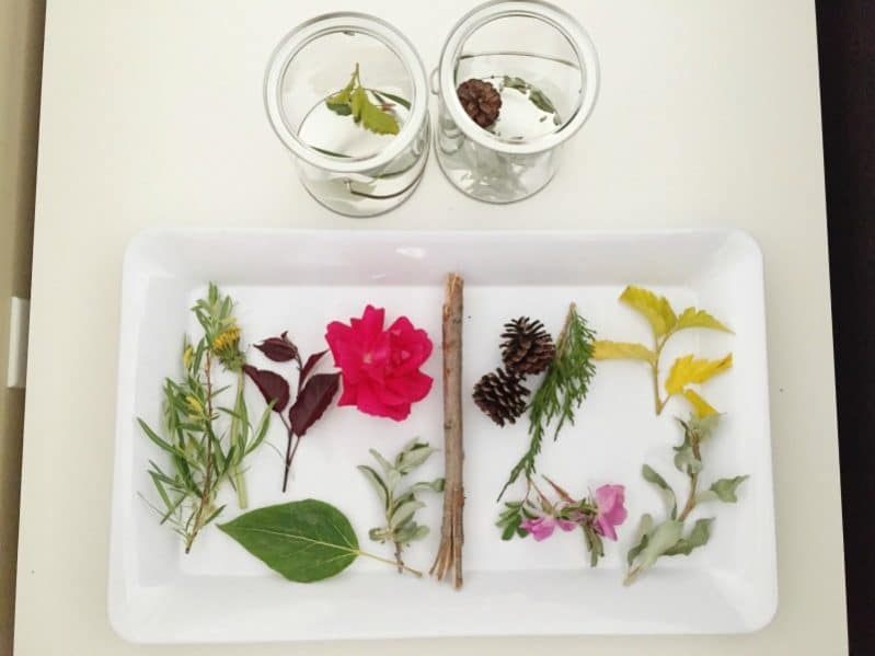 Collection of nature to do nature painting with the kids
