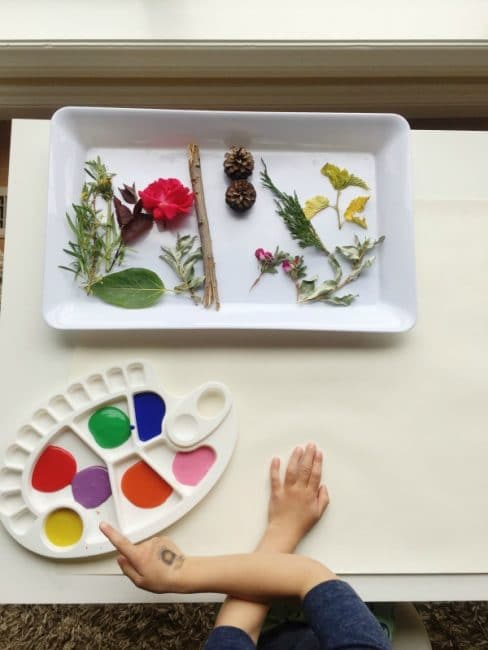 Collection to do some nature painting with the kids