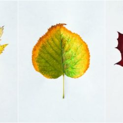 autumn-leaf-art-prompt-adults-craft1