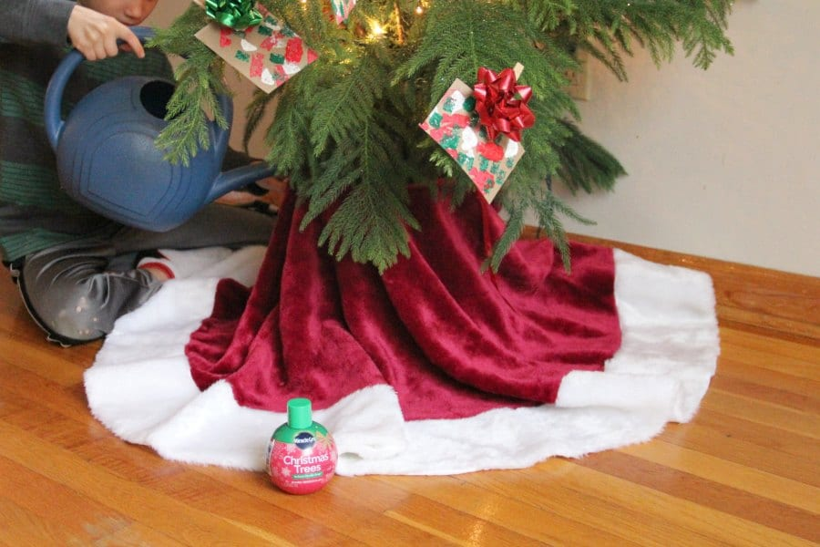 Use Miracle-Gro to hydrate the tree decorated with a Christmas ornament craft.
