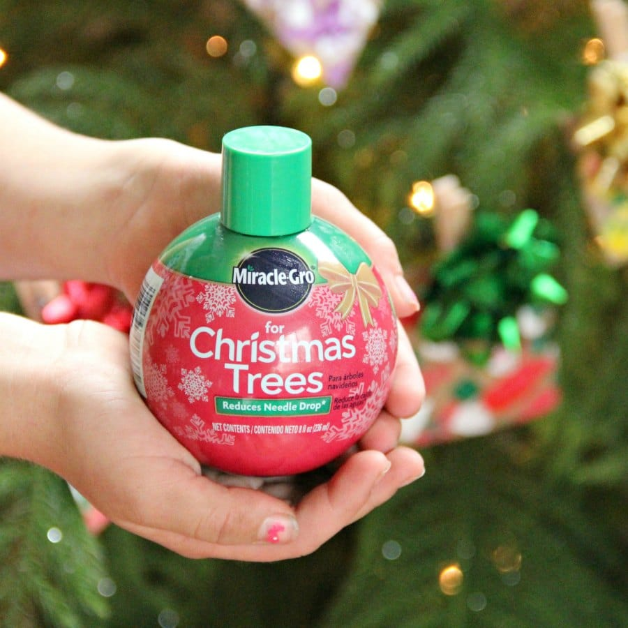Use Miracle-Gro for Christmas Trees this year.