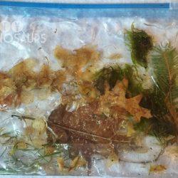 Nature Sensory Bags