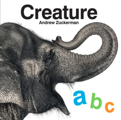 Take a walk on the wild side with this animal themed alphabet book!