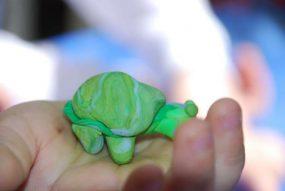 Turbo the turtle