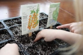 Tractor Ted's Seed Starting for Kids from Tractor Ted