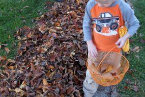 Leaf Activity