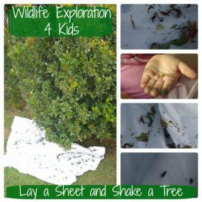 Lay a Sheet and Shake a Tree