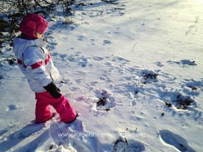 Animal Tracking with Children: A Beginner's Guide from Rain or Shine Mamma