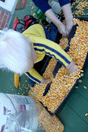 Corn sensory bin for toddlers
