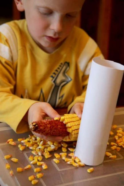 Experiment to find if the kernels take up more volume than the ear of corn itself