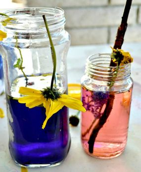 Explore Outdoors & Make Flower Potions from Blog Me Mom
