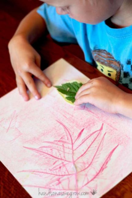 Match leaves to leaf rubbings
