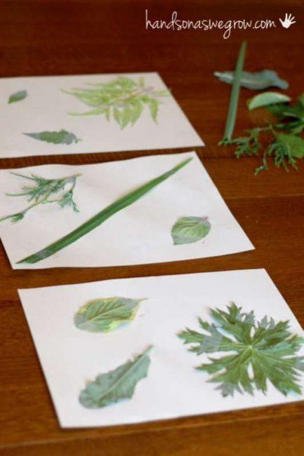 Setup to match leaf rubbings