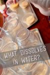 What dissolves in water? A simple experiment from the pantry.